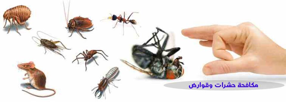 صورة مكافحة حشرات 60677088 |افضل شركة مكافحة الحشرات بالكويت